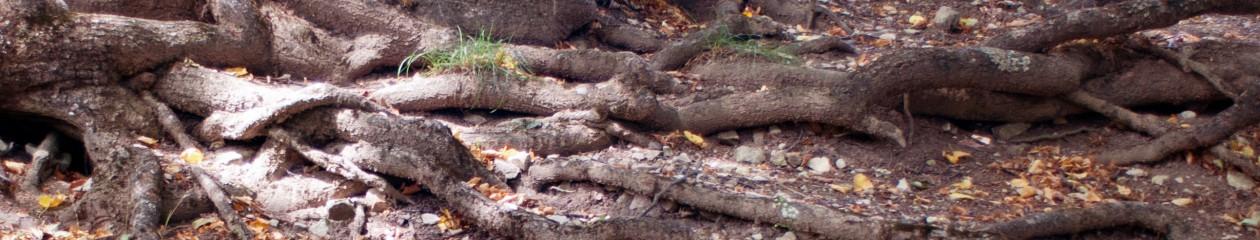 cropped-Wurzeln-1.jpg